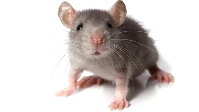 Rodents Management And also Elimination