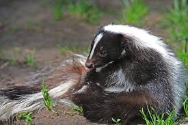Where do you turn with the clothing for skunk smell elimination