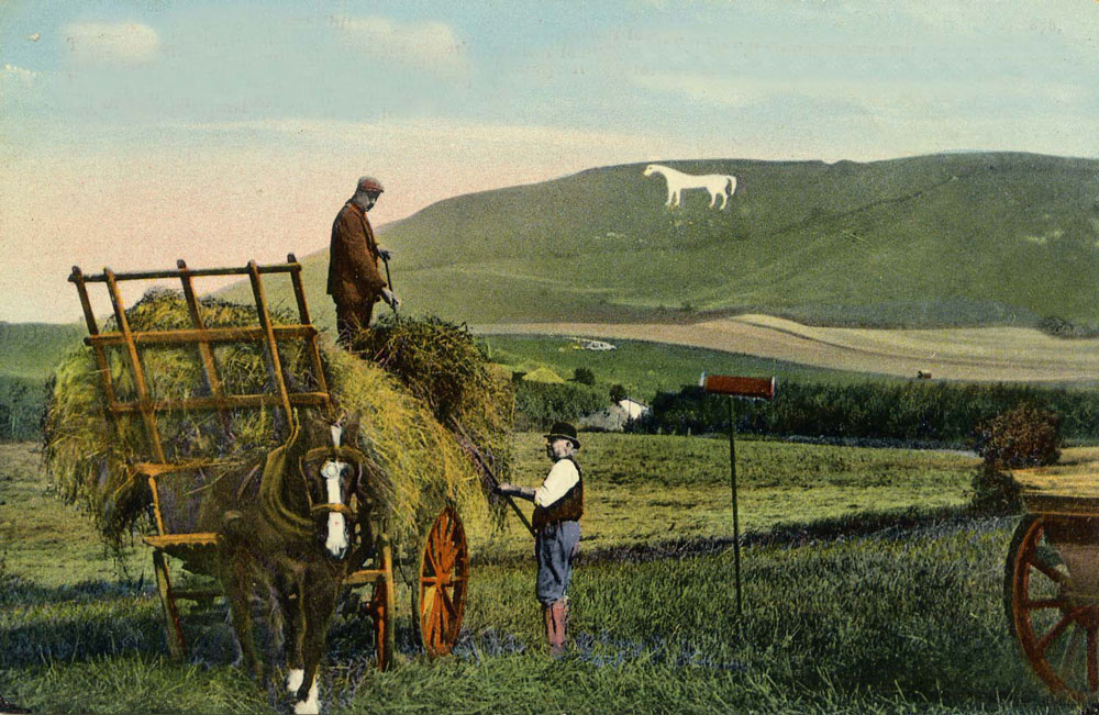 00117-w-horse-haymaking- Horse Gallery