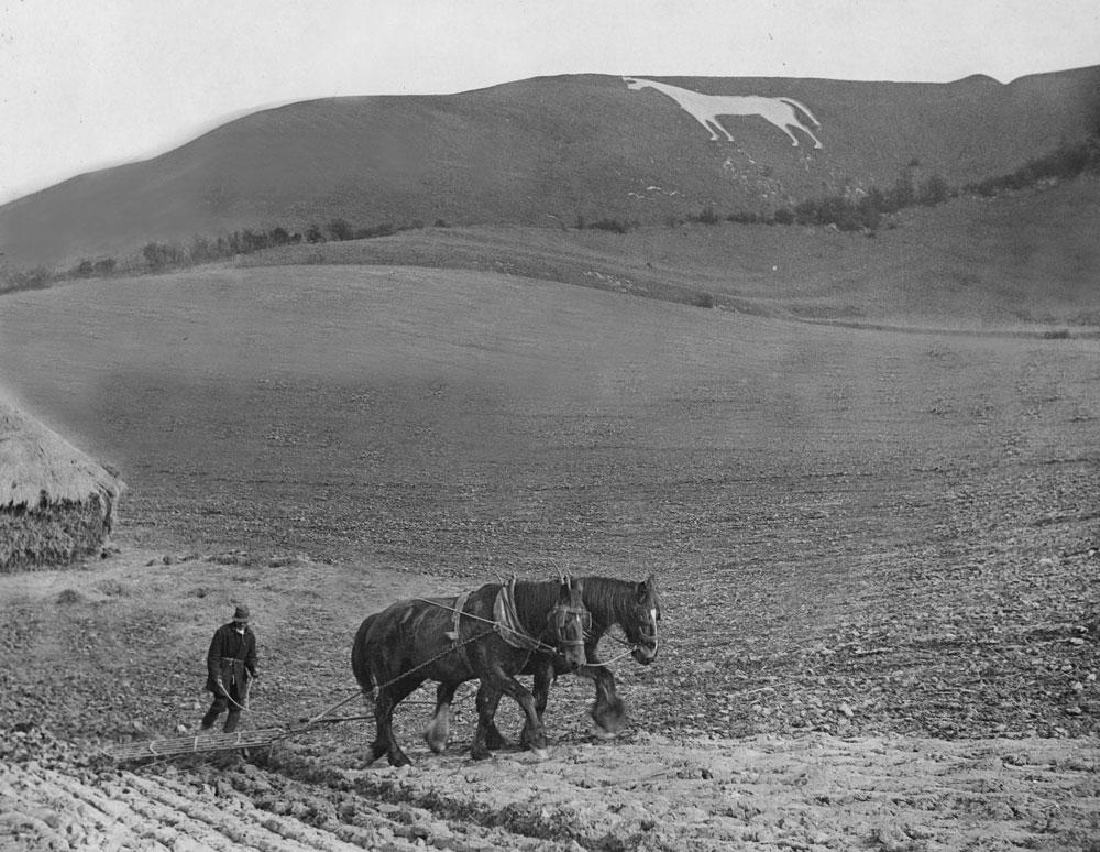 00124-w-horse-plough-- Horse Gallery