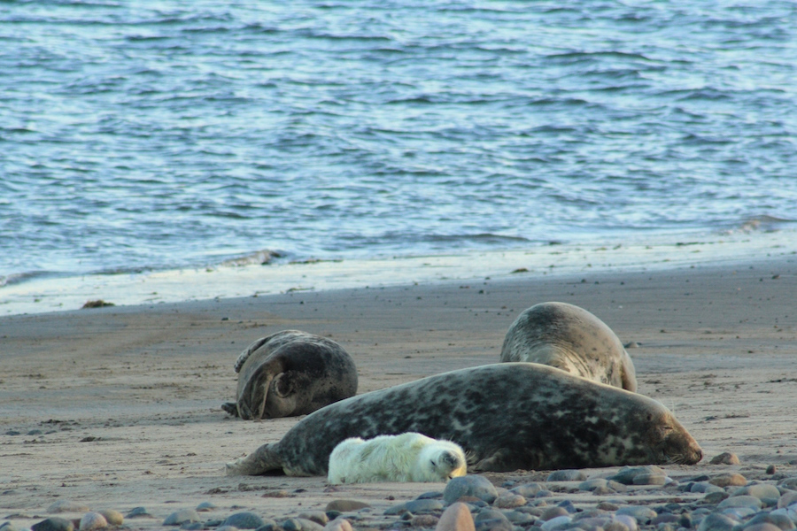 Seal Cam goes live