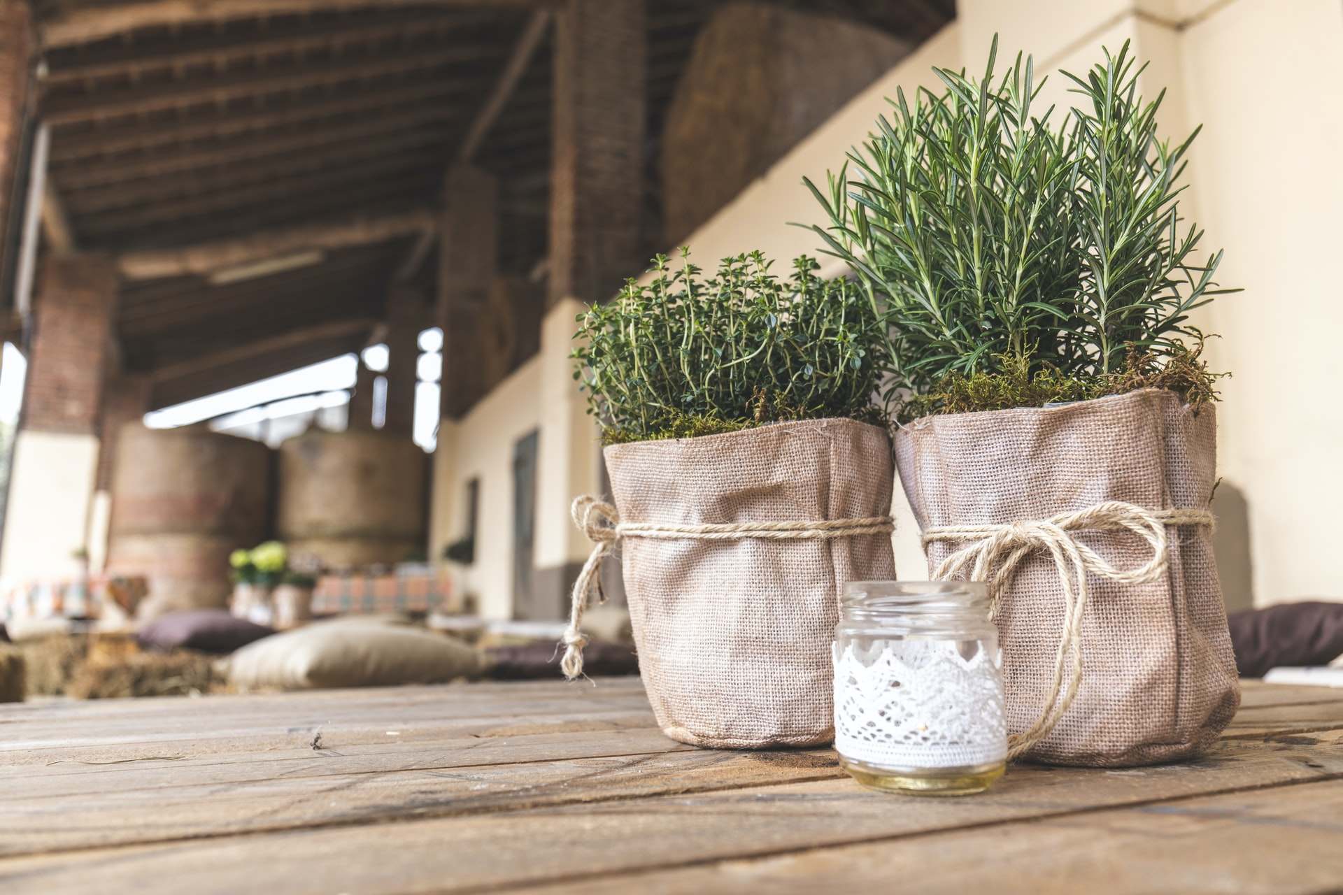 Rosemary medicinal herb and essential oil