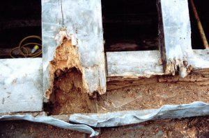 Rotting Timbers