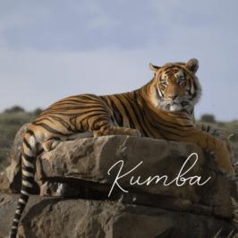 Tiger Kumba at Tiger Canyon Private Game Reserve