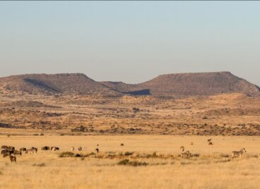 Karoo landscape with wildlife in the foreground at Tiger Canyon Private Game Reserve
