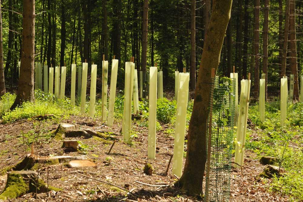 New Woodland Planting