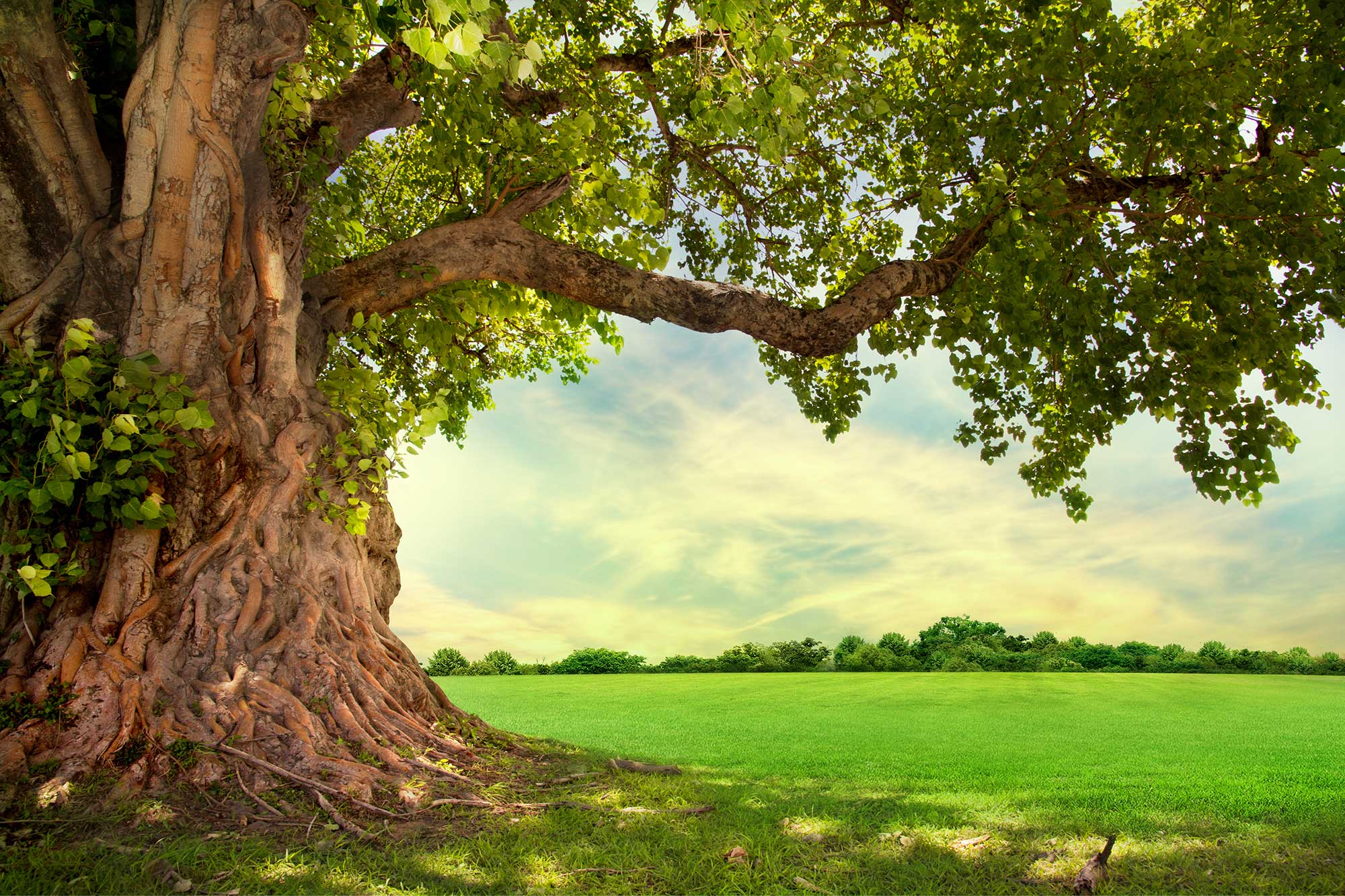 Healthy looking tree and meadow