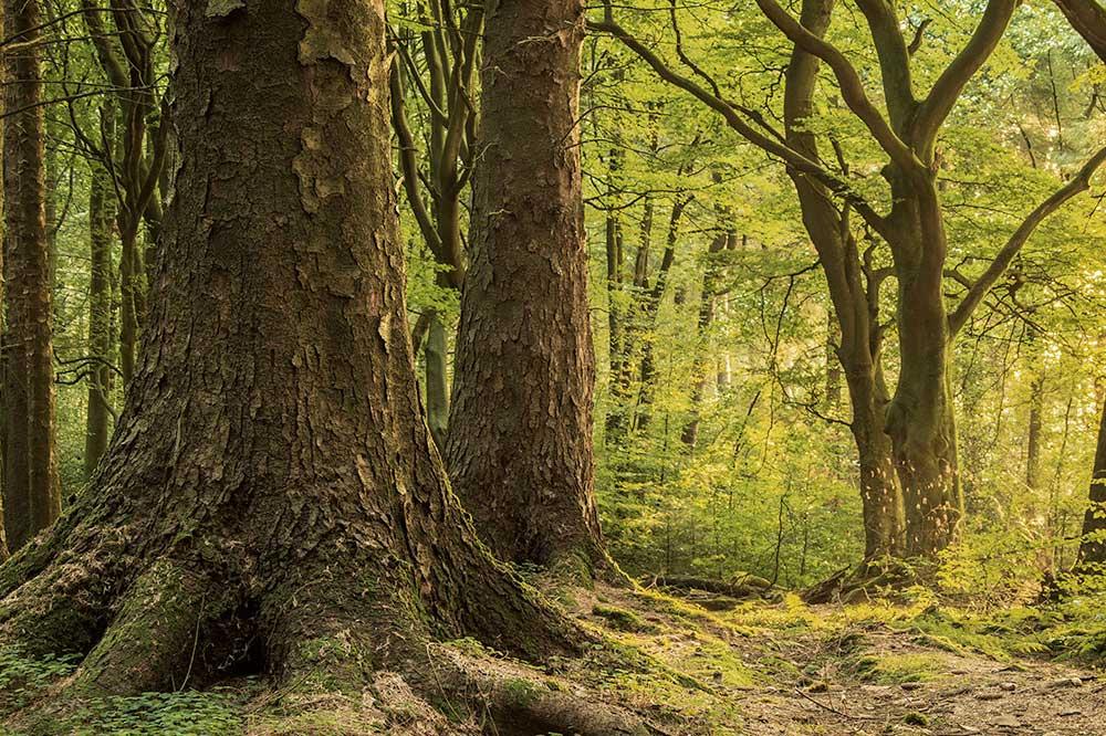 Quantified Tree Risk Assessment