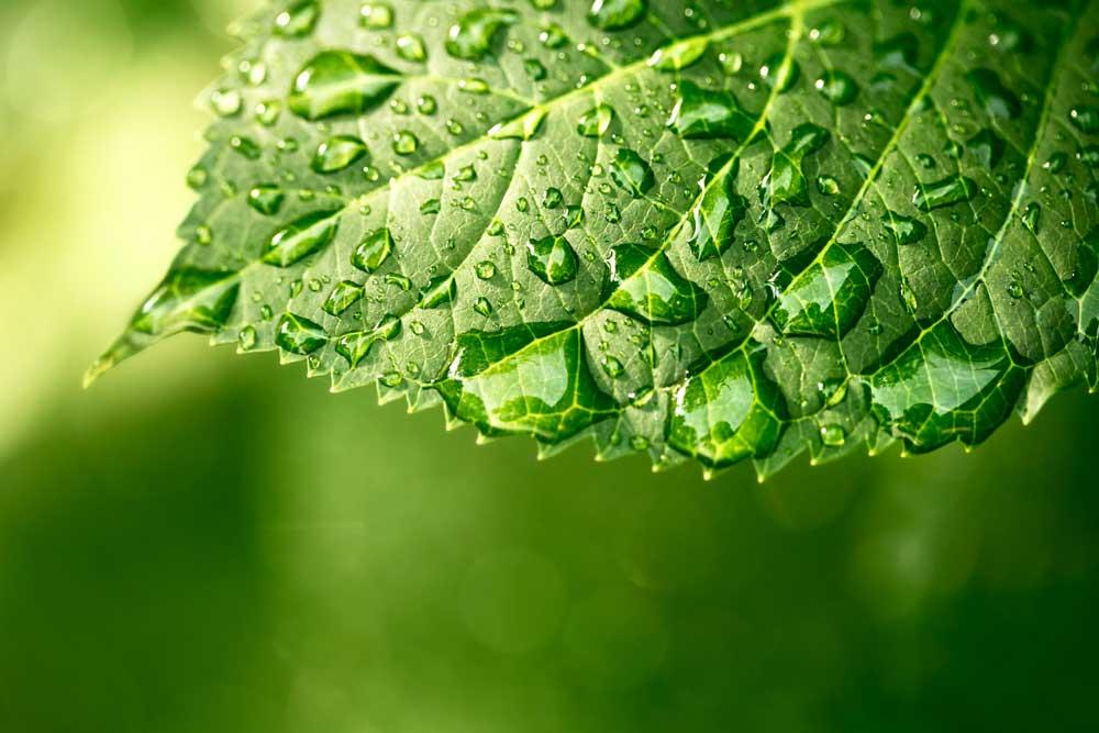 Plant Health