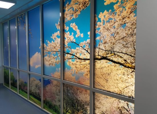 Blossoms in fake window