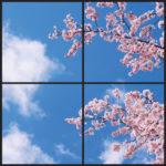 Blossom window design