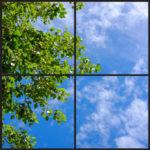 Green foliage with wispy clouds design