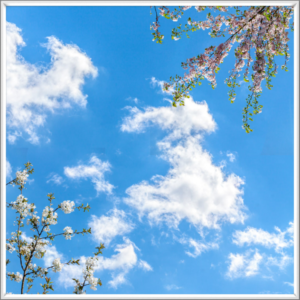 Pink and white blossoms under a blue sky with white clouds as a lighting solution for a windowless office or windowless room