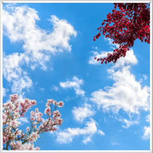 Artificial sky scene with bright red leaves and pink blossoms