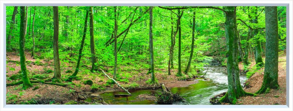 1 panel landscape window with green forest and stream
