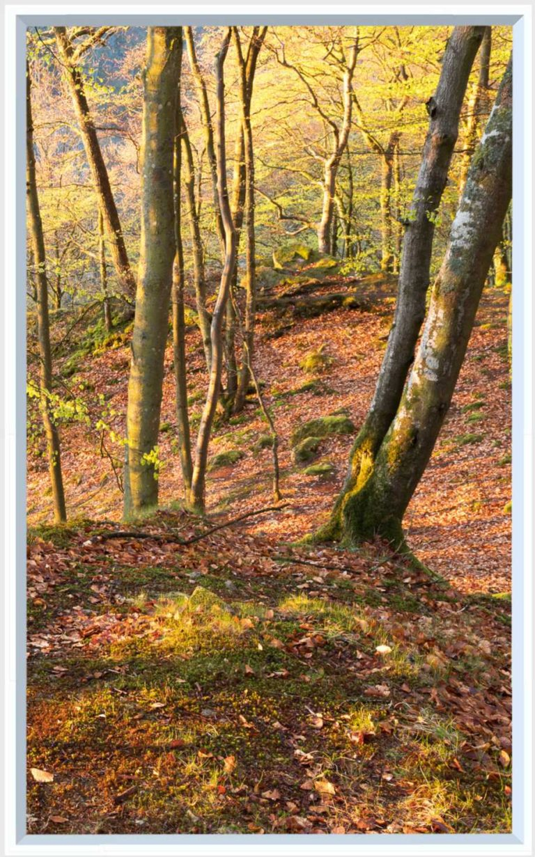 1 panel landscape window with golden forest