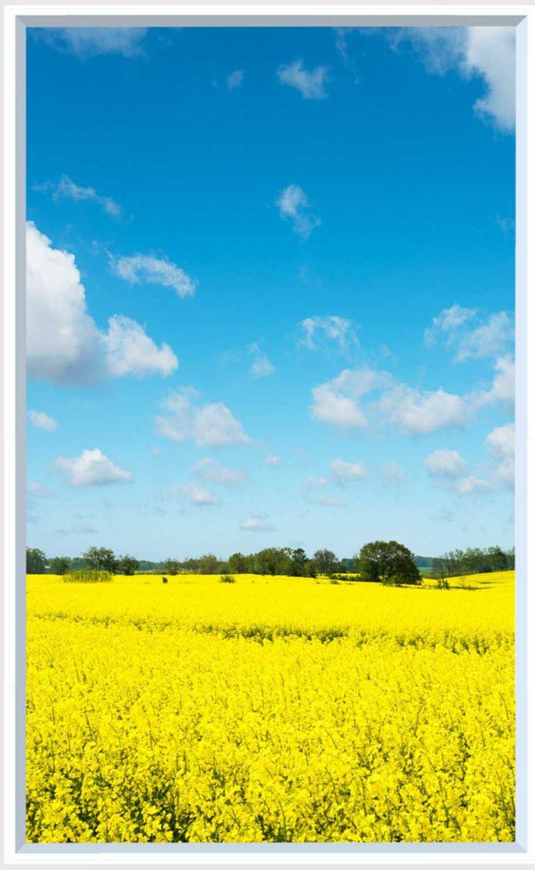 1 panel landscape window with yellow field under blue sky