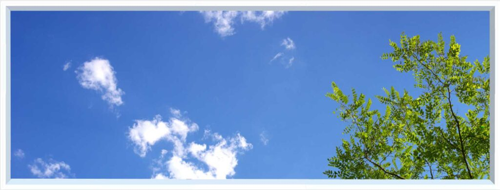 1 panel landscape window with blue sky and green tree