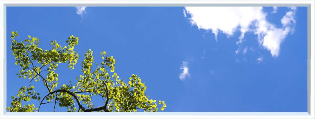 1 panel landscape window with blue sky and green leaves