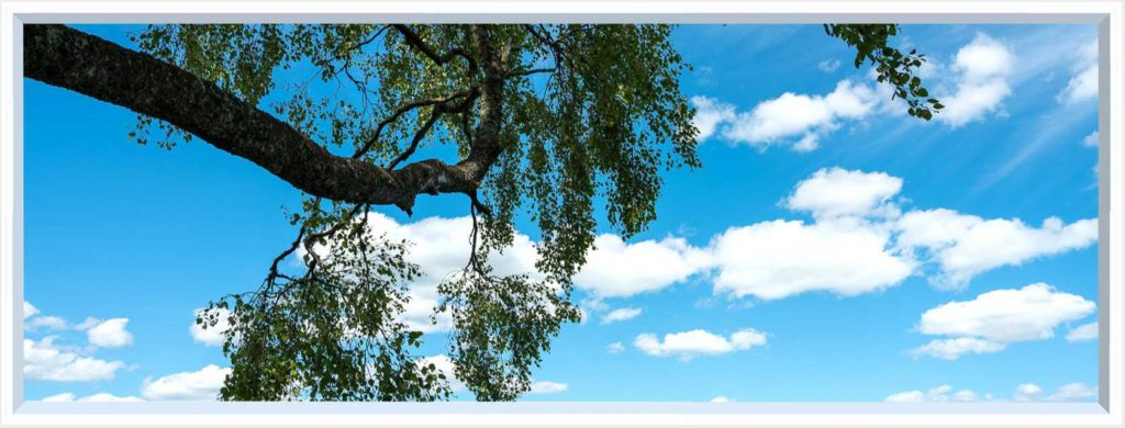 1 panel landscape window with long tree