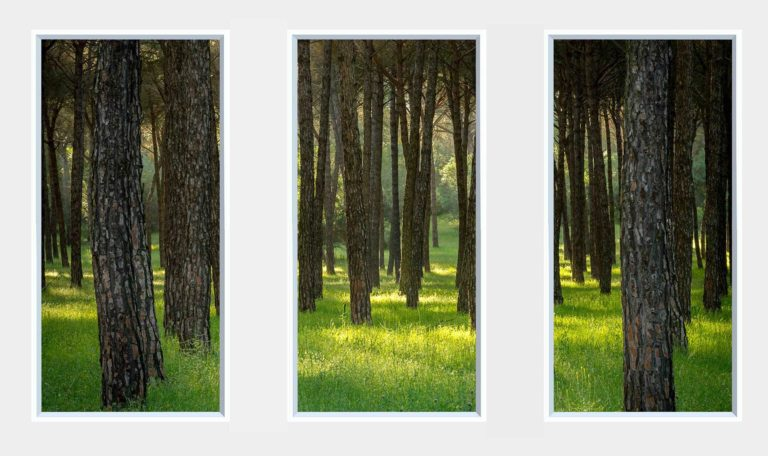 3 panel landscape window with woodland