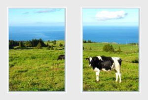 2 panel landscape window with sea hill view and cows
