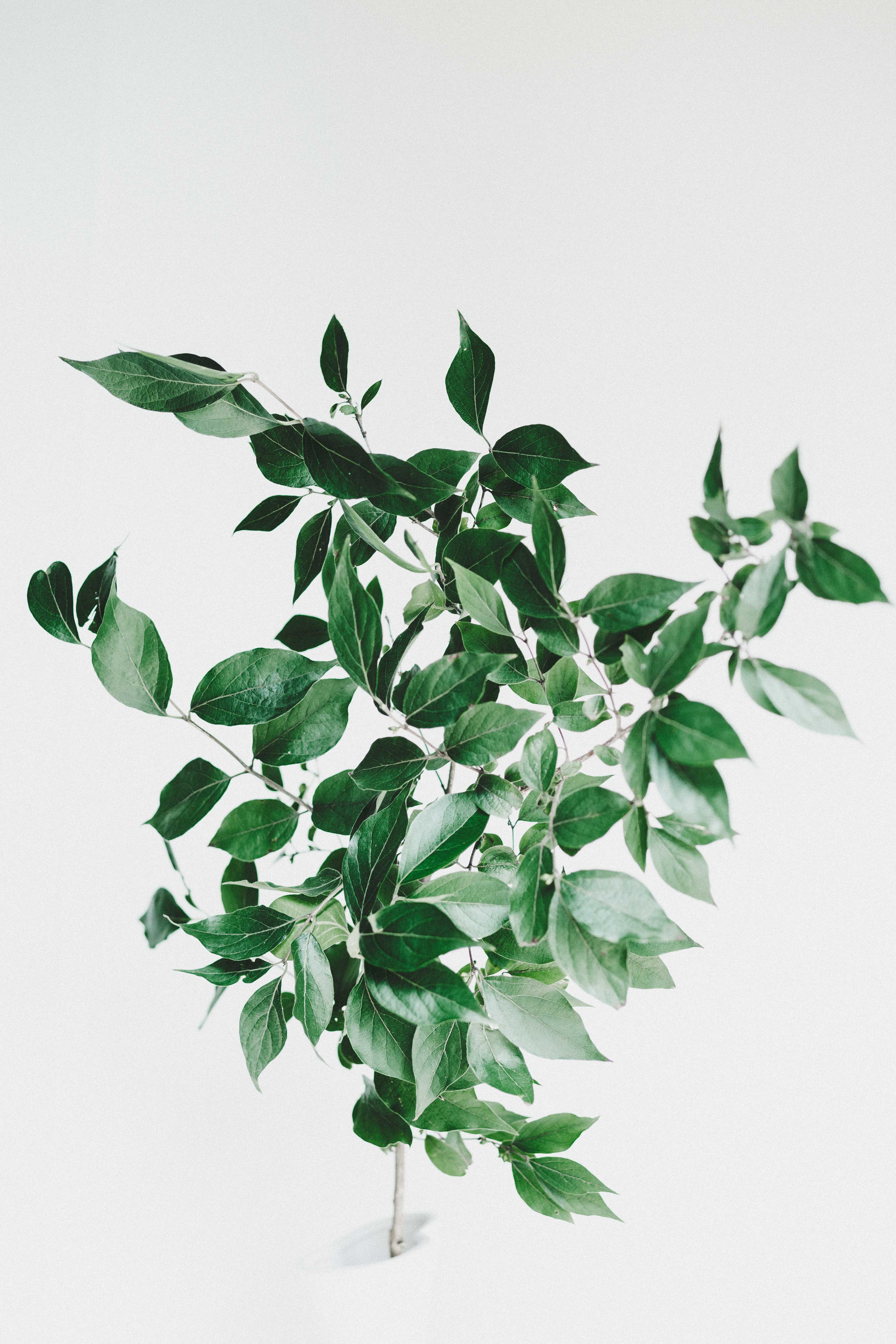 Green plant for interior home improvement