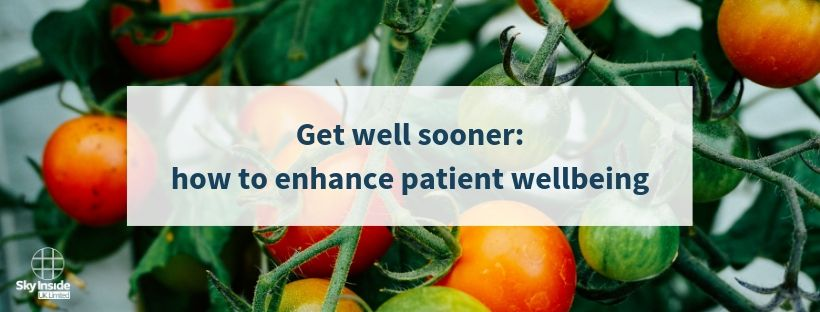 Blog banner with green and red tomatoes with text 'Get well sooner: how to enhance patient wellbeing'