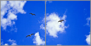 Kids 2-panel window with blue skies, white clouds and three flying seagulls