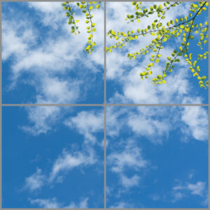 4-panel window with blue skies, white clouds and spaced-out green-yellow leaves