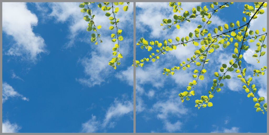 2-panel window with blue skies, white clouds and sparse green leaves