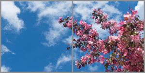 2-panel window with blue skies, white clouds and bright pink and pale pink flowers