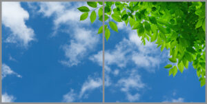2-panel window with blue skies, white clouds and bright green leaves on thin branches