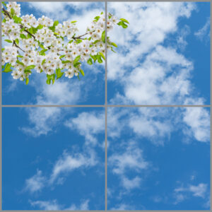 4-panel window with blue skies, white clouds and white flowers with green leaves on twigs