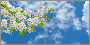 2-panel window with blue skies, white clouds and white flowers on a branch