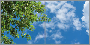 2-panel window with blue skies, white clouds and lush green leaves on a tree