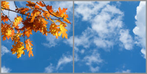 2-panel window with blue skies, white clouds and orange and yellow autumn leaves