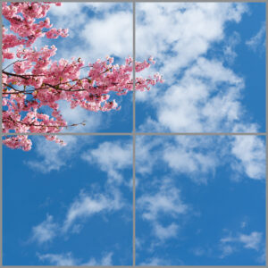 4-panel window with blue skies, white clouds and pink blossoms