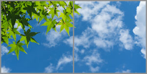 2-panel window with blue skies, white clouds and green leaves