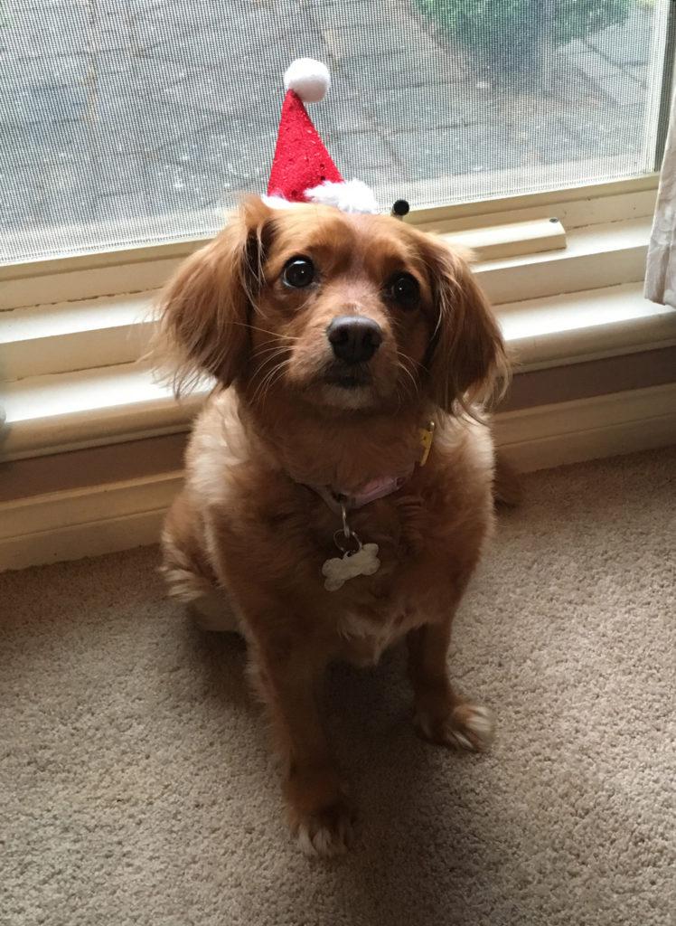 Christmas Taffy
