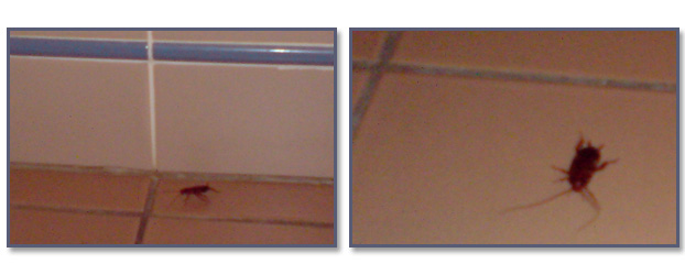 Hyatt Regency Coolum cockroaches in shower- Jonar Nader