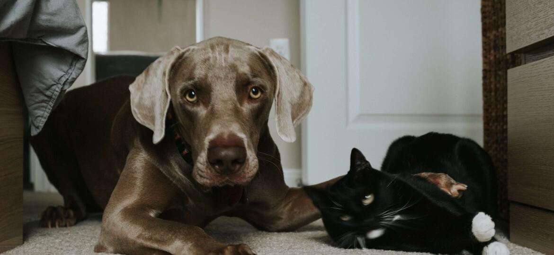 cat_or_dog