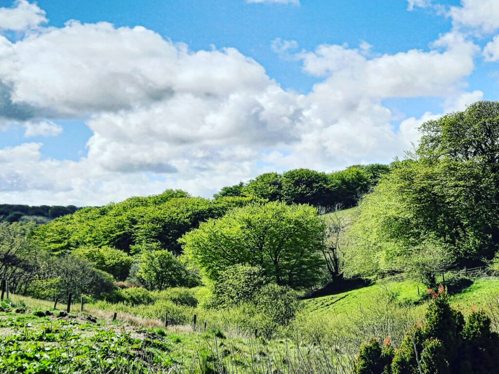 Views across the valley to Challacombe woods