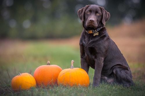 13 perfect pumpkin recipes