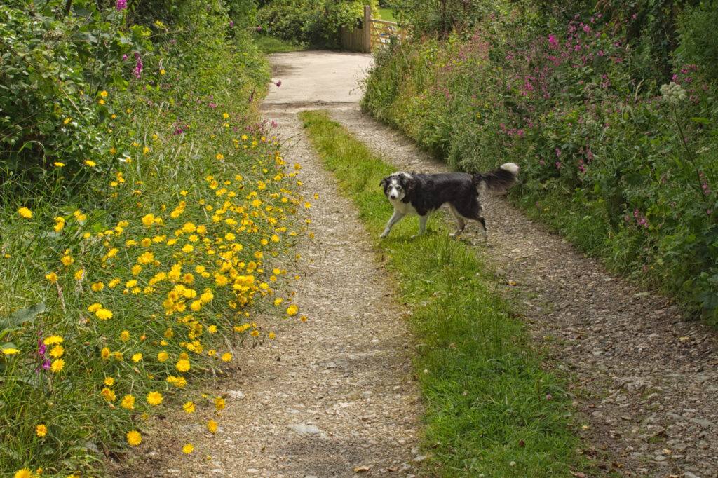 Bissoe trail Cornwall