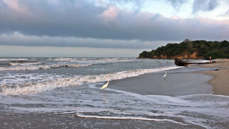 PALOMINO-COLOMBIA