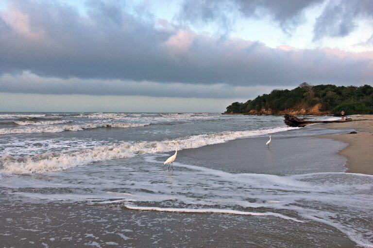 Palomino, donde los ríos se unen al mar