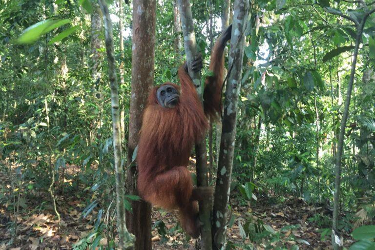 Explorando la jungla en Bukit Lawang