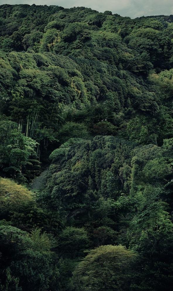 """Kamakura 1 & 2"" by Azza Hussein"