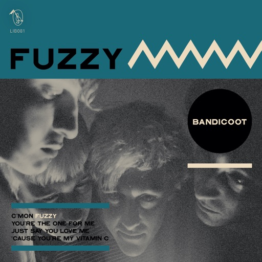 bandicoot fuzzy